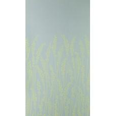 Feather Grass BP 5104